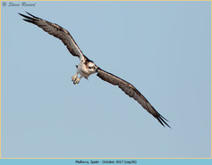 osprey-36.jpg