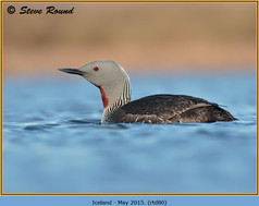 red-throated-diver- 80.jpg