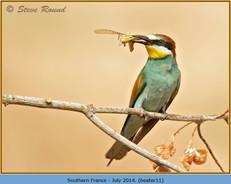 bee-eater-11.jpg