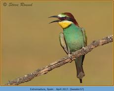 bee-eater-37.jpg