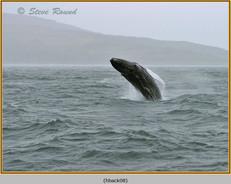humpback-whale-08.jpg