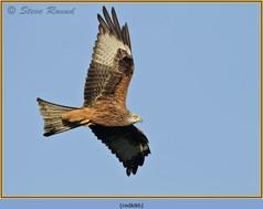 red-kite-86.jpg