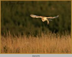barn-owl-35.jpg