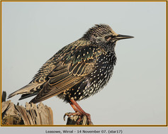 starling-17.jpg