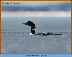 great-northern-diver-38.jpg
