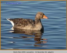 greylag-goose-01.jpg