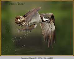 osprey-27.jpg