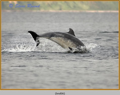bottlenose-dolphin-06.jpg