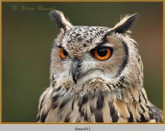 bengal-eagle-owl-01.jpg
