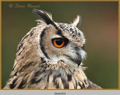 bengal-eagle-owl-03.jpg