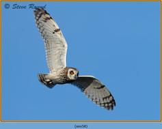 short-eared-owl-58.jpg