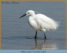 little-egret-72.jpg