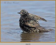 starling-19.jpg