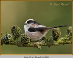 long-tailed-tit-30.jpg