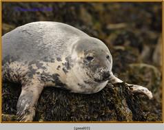 grey-seal-03.jpg