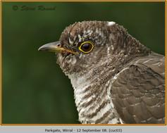 cuckoo-03.jpg