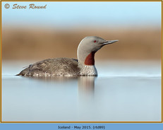 red-throated-diver- 89.jpg