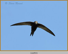 swift-03.jpg