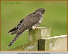 cuckoo-04.jpg