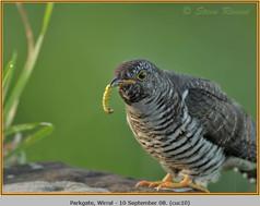 cuckoo-10.jpg