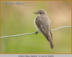 spotted-flycatcher-04.jpg