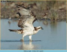 osprey-52.jpg
