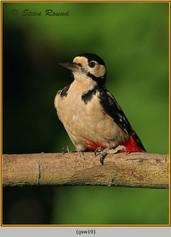 gt-s-woodpecker-19.jpg