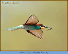 bee-eater-04.jpg
