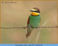 bee-eater-50.jpg
