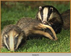 badger-32.jpg