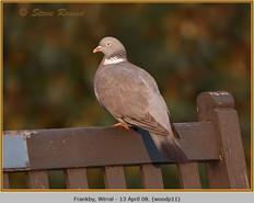 wood-pigeon-11.jpg