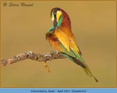 bee-eater-41.jpg