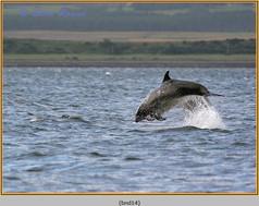 bottlenose-dolphin-14.jpg