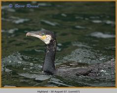 cormorant-07.jpg