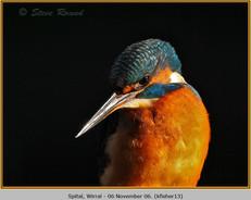 kingfisher-13.jpg