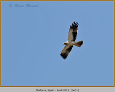 booted-eagle-01.jpg