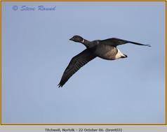 brent-goose-03.jpg