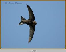 swift-24.jpg