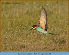 bee-eater-45.jpg