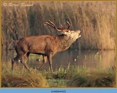 red-deer-62.jpg