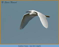 little-egret-69.jpg