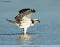 osprey-49.jpg