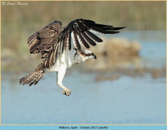 osprey-40.jpg