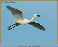 little-egret-79.jpg