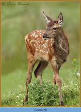 red-deer-70.jpg