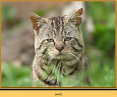 wildcat-03.jpg