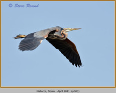 purple-heron-03.jpg