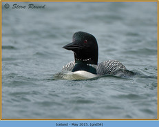 great-northern-diver-54.jpg