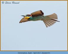 bee-eater-47.jpg