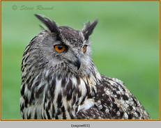 eagle-owl-03c.jpg